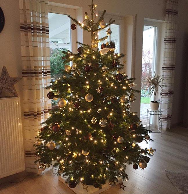 Weihnachtsbilder Suchen.Leser Weihnachtsbilder 1 Bäume An Der Decke Und Katzen Mit Mützen
